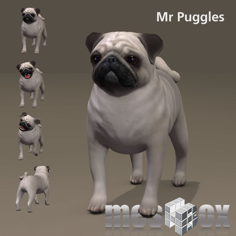 Mister Puggles the Pug