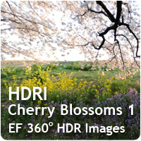HDRI Cherry Blossoms 01