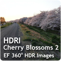 HDRI Cherry Blossoms 02