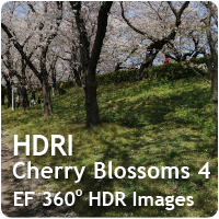 HDRI Cherry Blossoms 04
