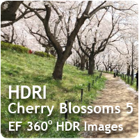 HDRI Cherry Blossoms 05