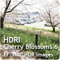 HDRI Cherry Blossoms 06