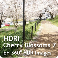 HDRI Cherry Blossoms 07