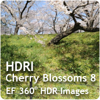 HDRI Cherry Blossoms 08
