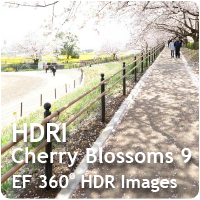 HDRI Cherry Blossoms 09