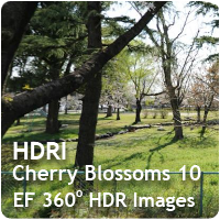 HDRI Cherry Blossoms 10