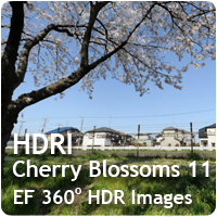 HDRI Cherry Blossoms 11