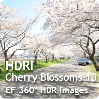 HDRI Cherry Blossoms 13