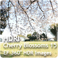 HDRI Cherry Blossoms 15